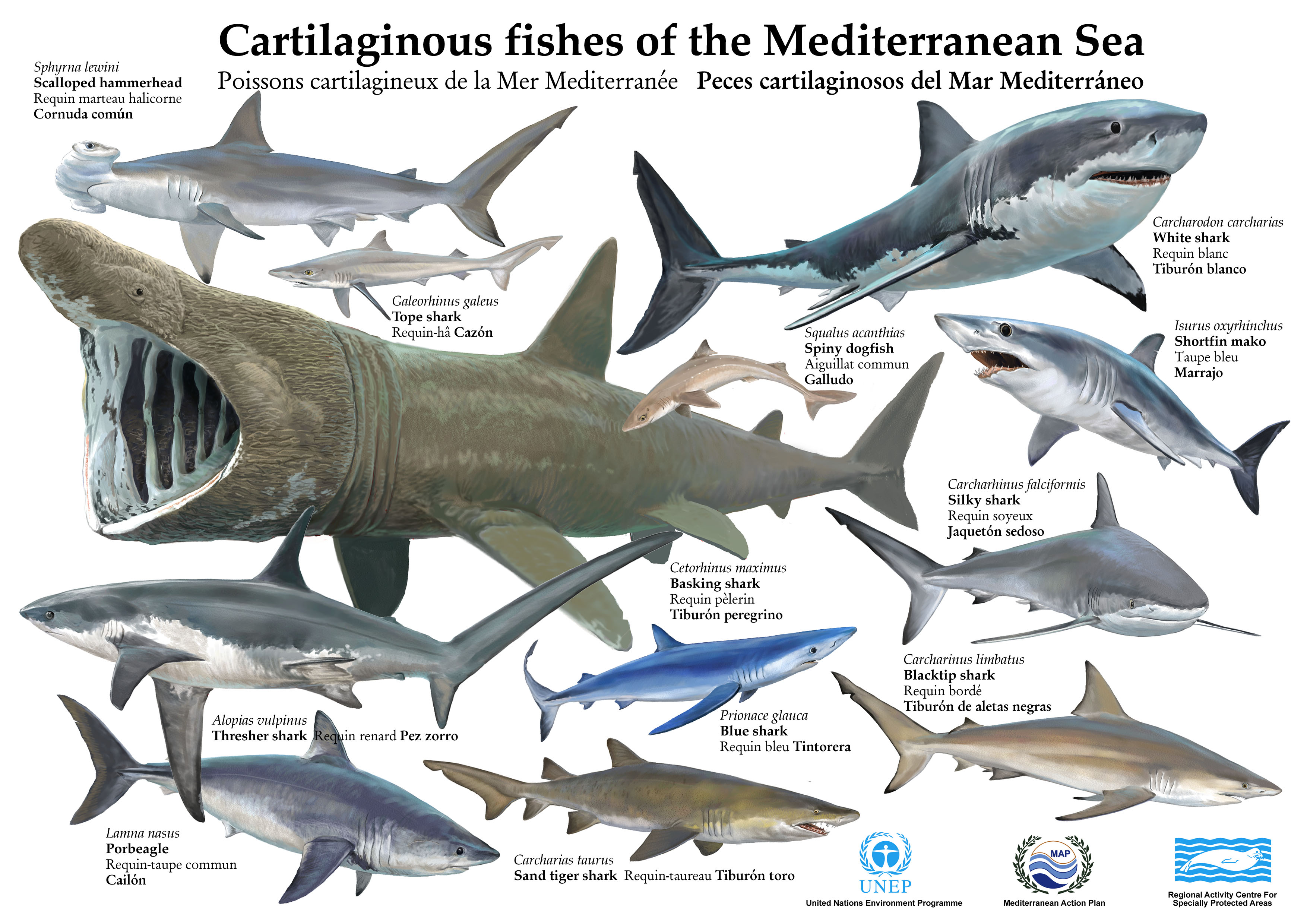 Let 39 s learn biology and geology in english cartilaginous for Are fish mammals