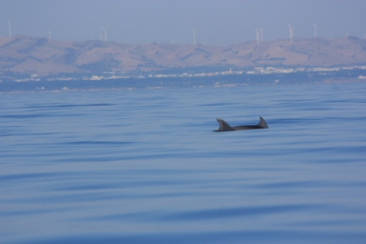Dolphin in Bizerte bay