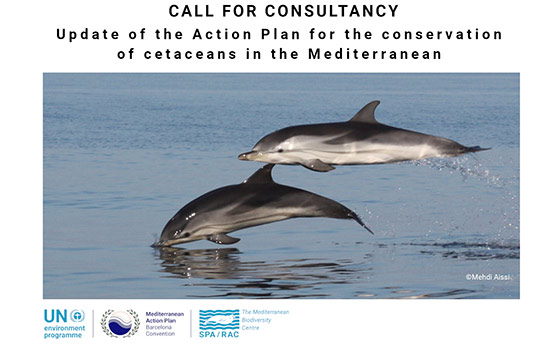 Call Action Plans Cetaceans