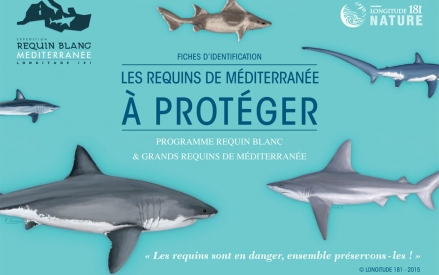 Presentation of Sharks of the med