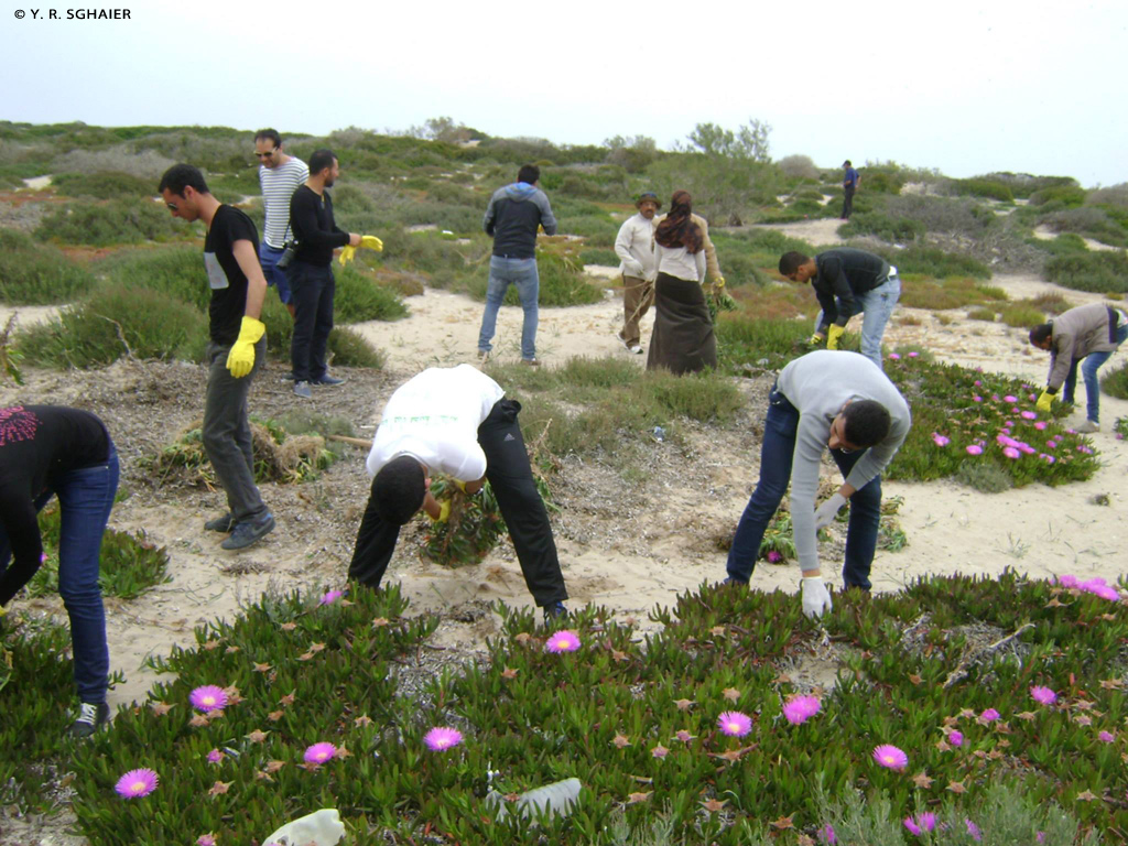 Removal campaign of the invasive plant Carpobrotus (Sour Fig) in the future MPA of the Kuriat Islands (Tunisia)
