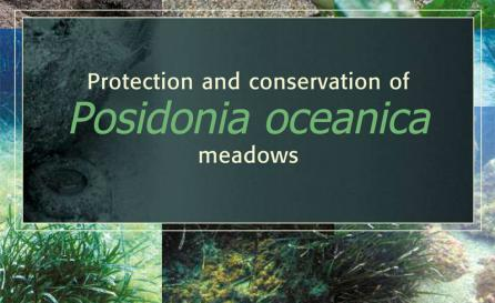 Protection and Conservation of Posidonia oceanica meadows